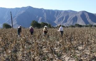 Da a conocer Agricultura Reglas de Operación de Producción para el Bienestar