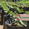 DIF estatal apoyo con hortalizas a 27 centros asistenciales de la capital