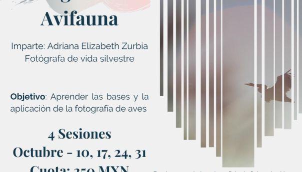 Invita COPOCYT a curso virtual de fotografía de avifauna