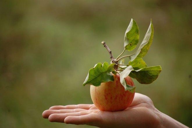 Det godaste äpplet jag någonsin ätit..