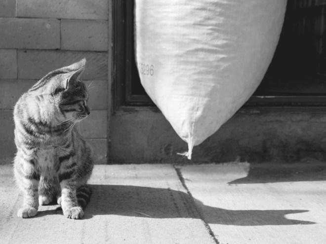 Kisse katt.