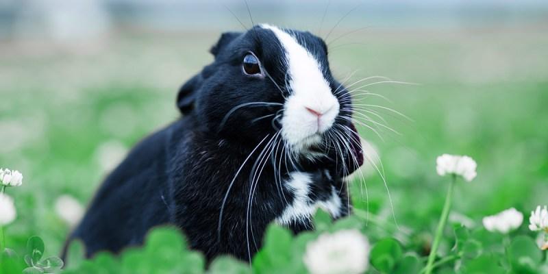 【養兔記事】養兔子的好處&壞處...再給我一次機會,我會選擇養兔子嗎?