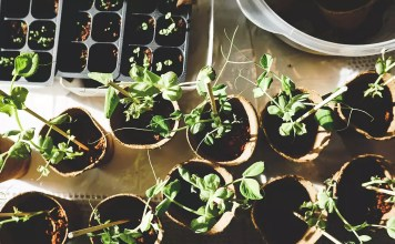 Градинарството бори депресията