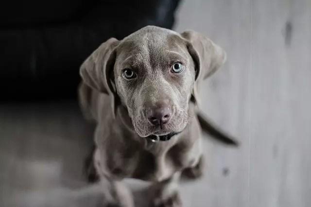 Съновник Баба Ванга - Куче