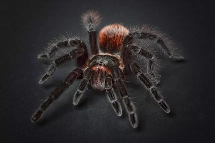 Паяците хапят само при самозащита