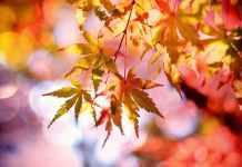 имунитет и есента