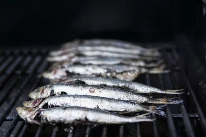 Мазни морски риби