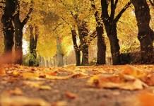 Есента събужда хроничните болежки