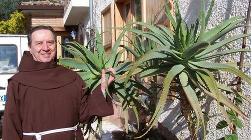 18 tác dụng của cây Aloe Vera 2