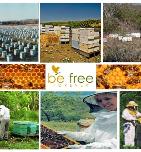 Những giá trị & lợi ích đem lại từ ong mật