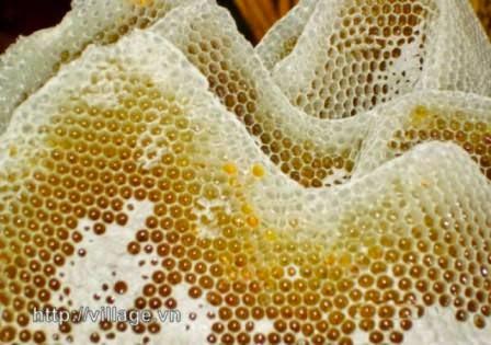 Viên keo ong Forever Bee Propolis 027 có tốt không?