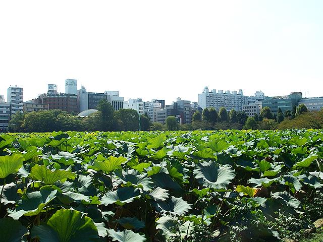 上野恩賜公園写真