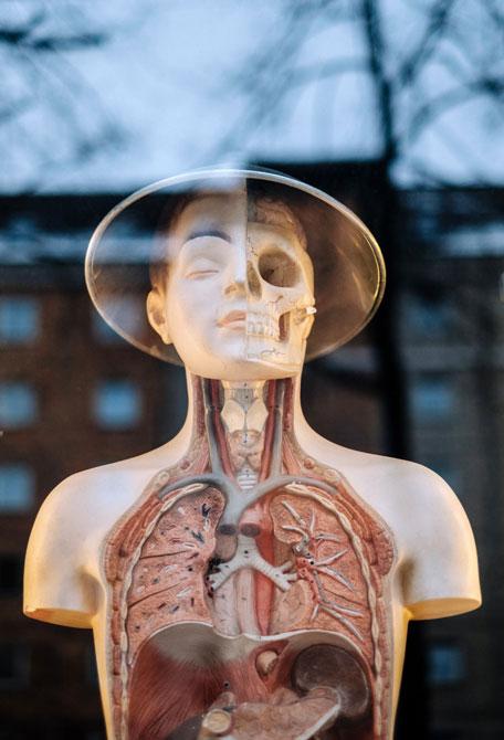 Santé, humain, anticiper les besoins. Génome humain, des pistes de réflexion à découvrir sur Sansible. #santé #humain #genetique #futur #etrehumain #genome #biotechnologie #sansible