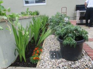 vegetable garden & bbq