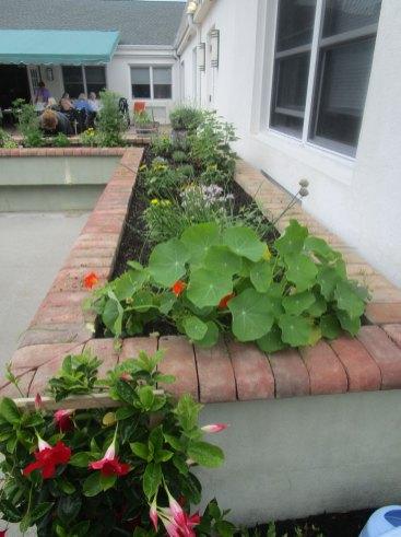 weeding the vegetable garden