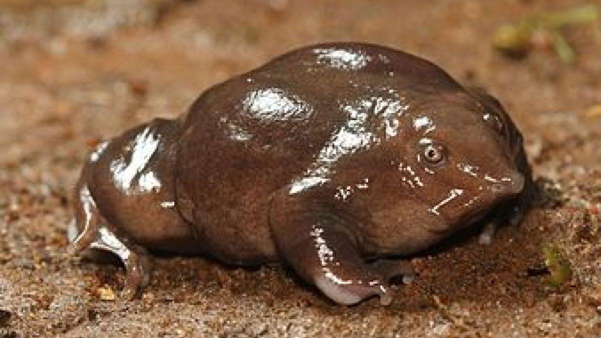 National amphibian