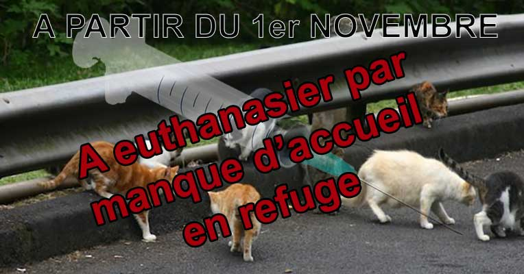 identification_chats_1_novembre