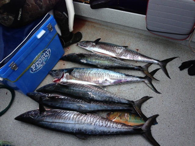 Spearfishing | Sans Souci Dolphins Spearfishing Club