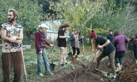 Seven people standing and digging a swale in an orchard