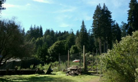 The NEST property with redwood trees, the garden fence, and the tent.