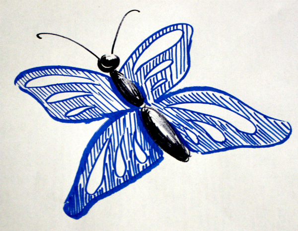 drawing of a butterfly with blue winds