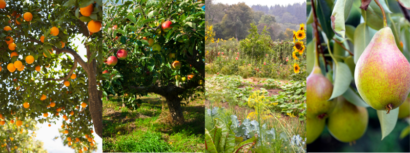 food-forests-1