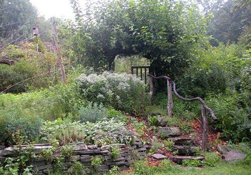 permaculture-design-forest-garden-500w