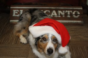 Lacey Claus