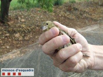 Ocells-Gimenells-4