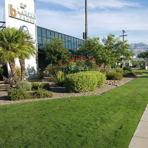 maintaining commercial landscaping