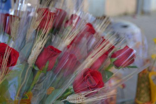 Las roses, las grandes protagonistas de la jornada // Elisenda Colell