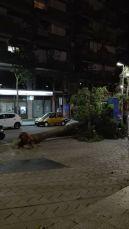 Un arbre va caure sobre d'un cotxe a plaça Catalunya // Roser Quitllet