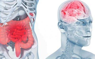 Microbiote inflammation et dépression
