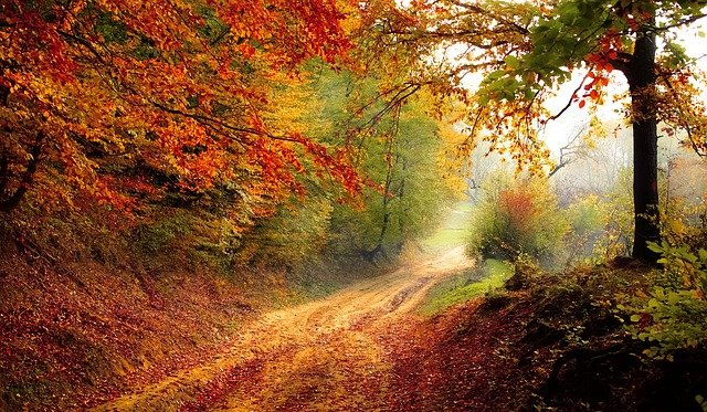 Shinrin-yoku enfants - forêt d'automne