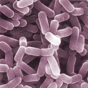 Sante enfants environnement bacteries