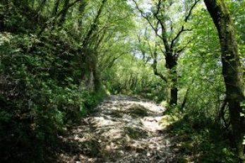 principe-nature-enfants-louv3