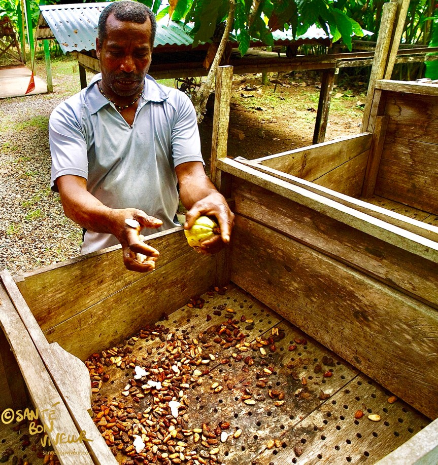 Raw Chocolate. Fermentation crates for cocoa beans at the Chocolate Museum, Limón Province, Costa Rica, that I visited in 2011