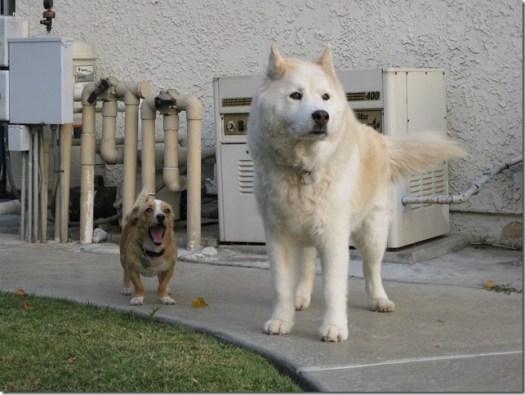 grand chien petit chien