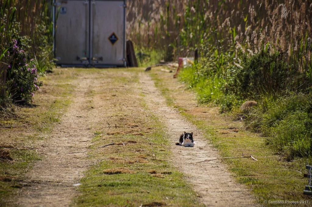 El gato guardián
