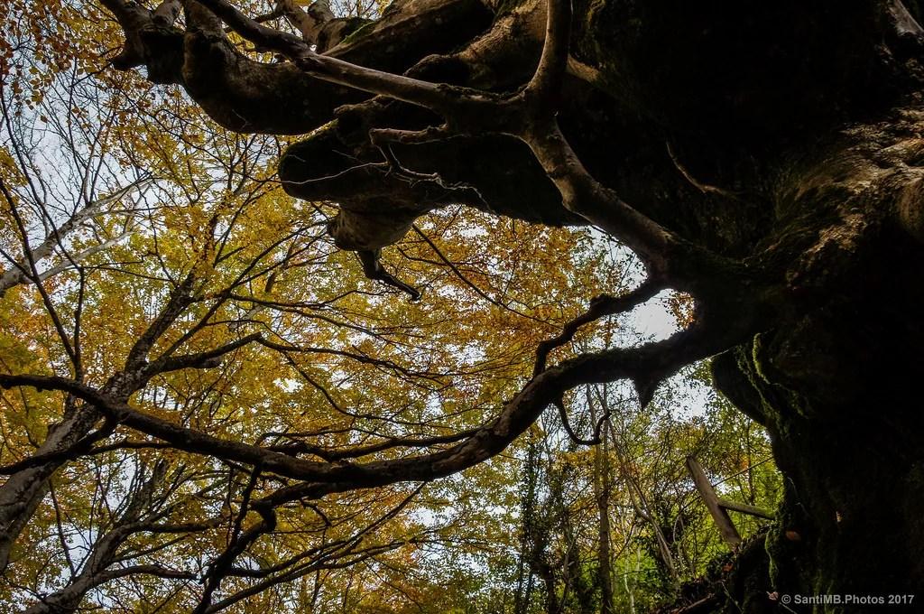 Bajo el gran árbol