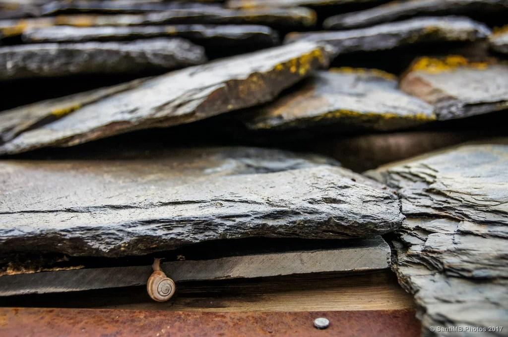 El caracol en el tejado