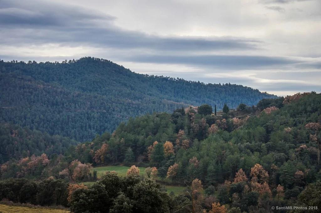 Bosques del Berguedà