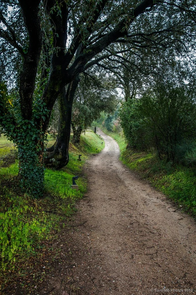 Camino de subida