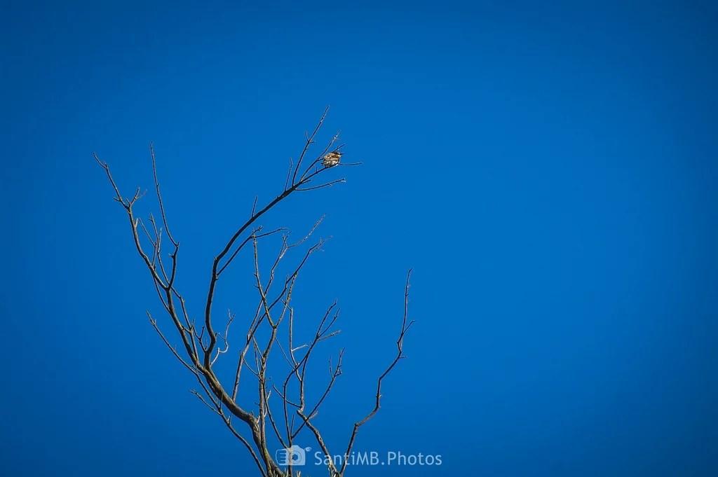 El abejaruco