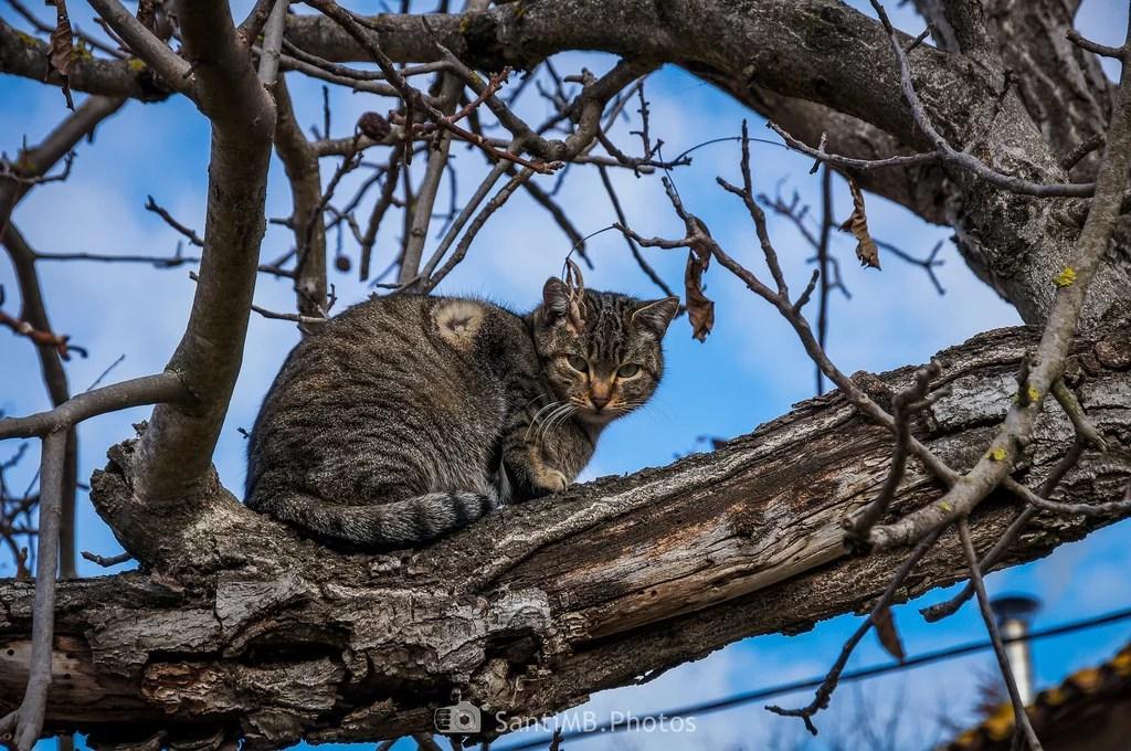 El gato en la rama