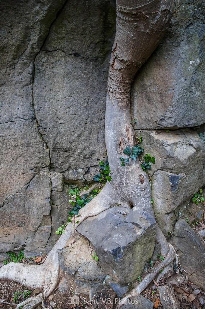 La raíz discreta