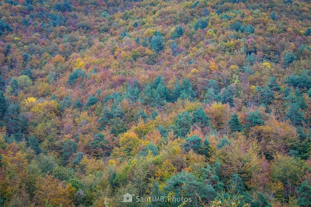 Bosque multicolor