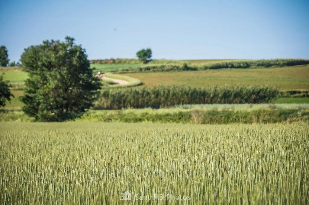 Otros campos