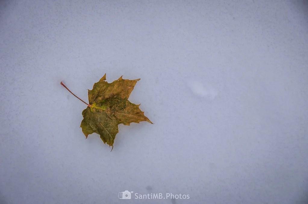La hoja en la nieve