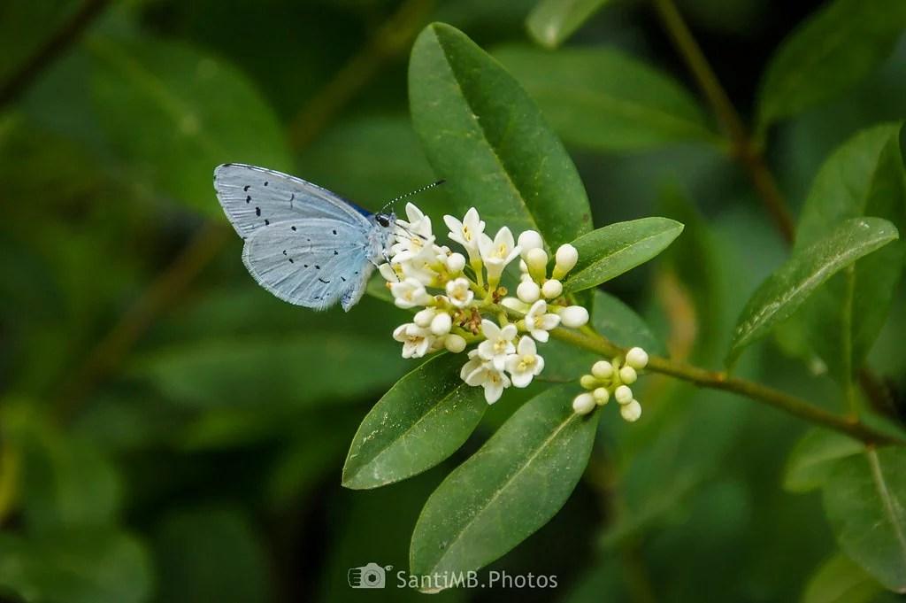 Sorbete de néctar